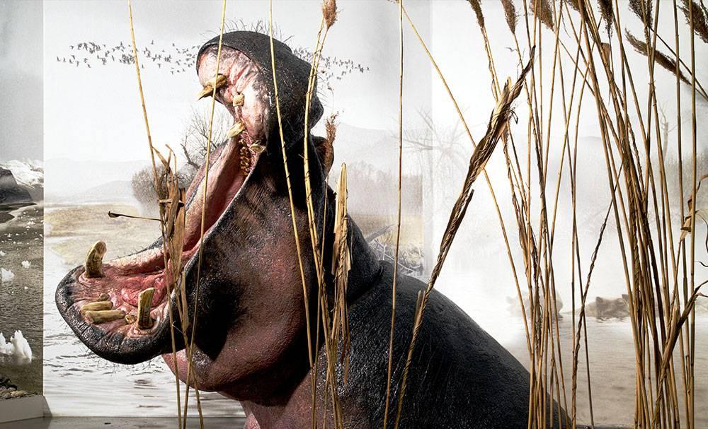 Safari am Oberrhein – Flusspferden auf der Spur