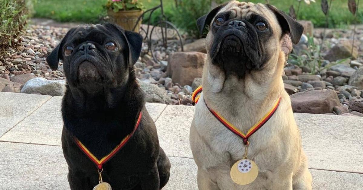 """Messe: """"Mein Hund - Partner auf vier Pfoten"""