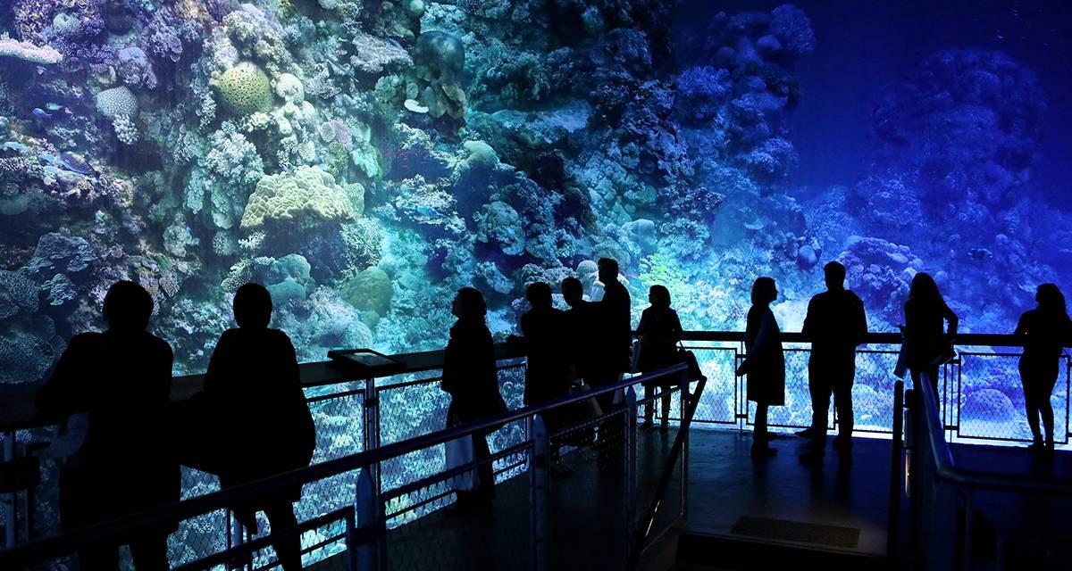 """Klasse! """"Great Barrier Reef"""" kommt in den Schwarzwald"""