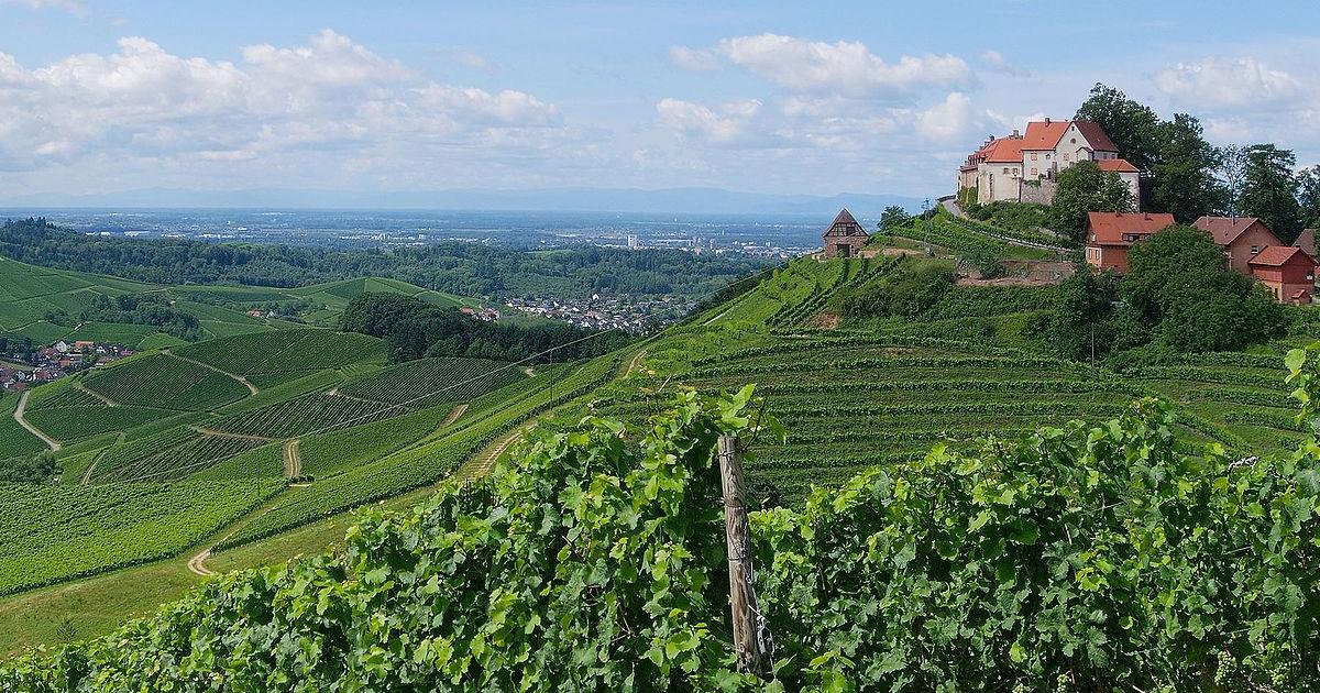 """Wanderung vom Feinsten: """"Durbacher Weinpanorama"""""""