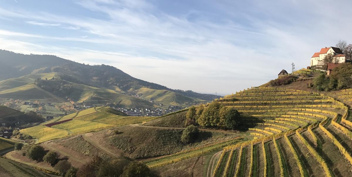 Hallo Wein! Hallo Schwarzwald!