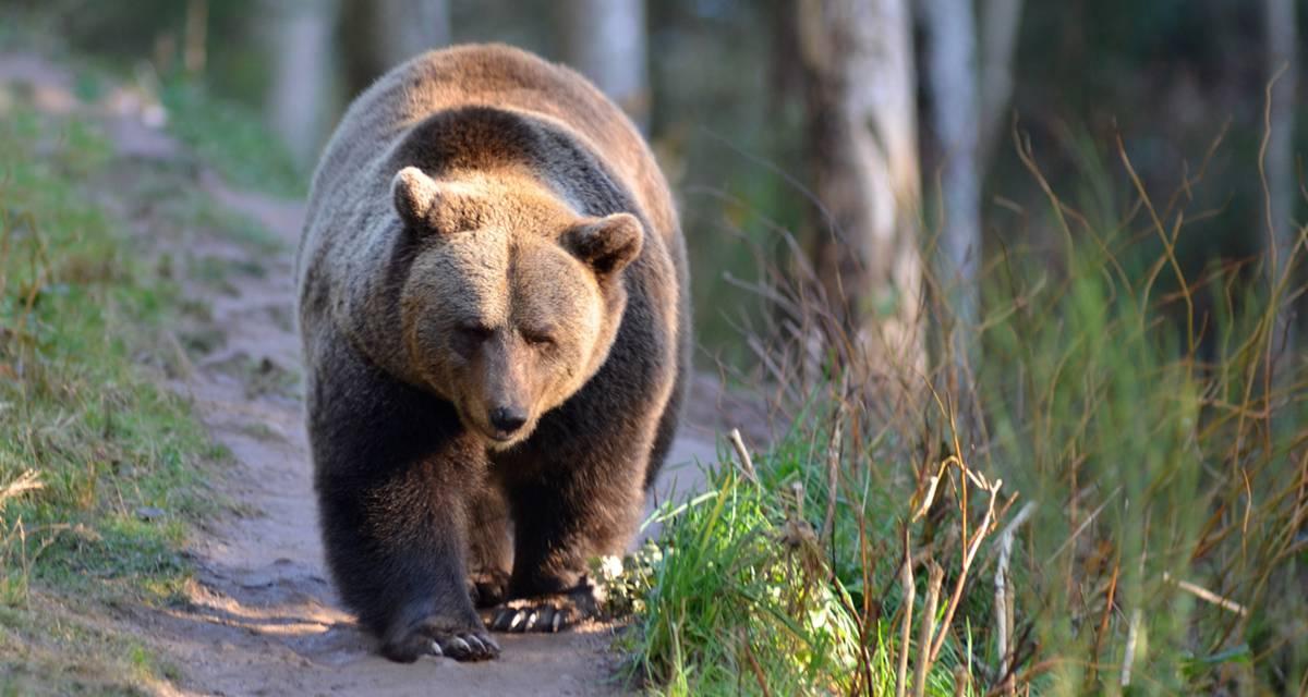 Freude über 500.000 Besucher im Schwarzwälder Wolf- und Bärenpark